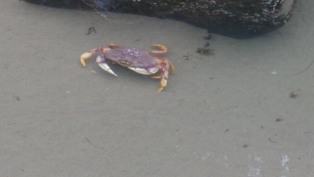 TidePools-lost.crab
