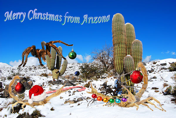 Merry Christmas from Arizona | Streaming Around